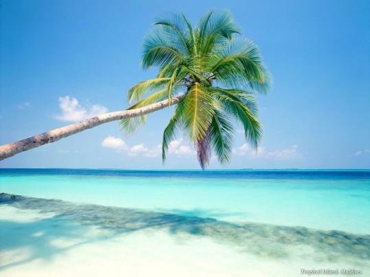 Riviera Maya Real Estate Tulum