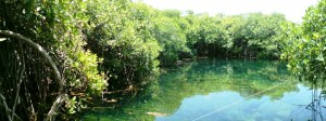 Cenote in Tulum Jungle, just a few steps from the beach